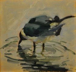 Seagull in Puddle *SOLD*