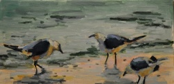 Shore Birds *SOLD*